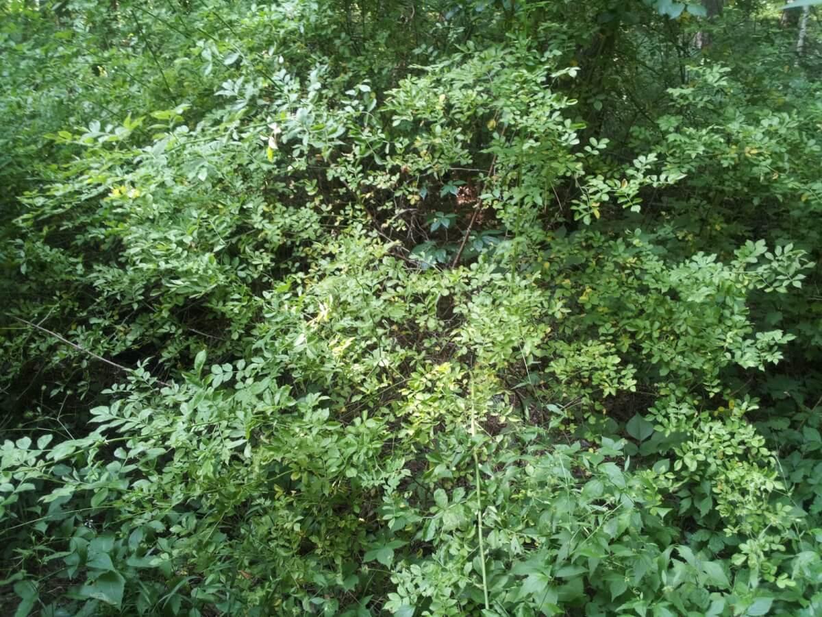 beaverrescue-4-13581