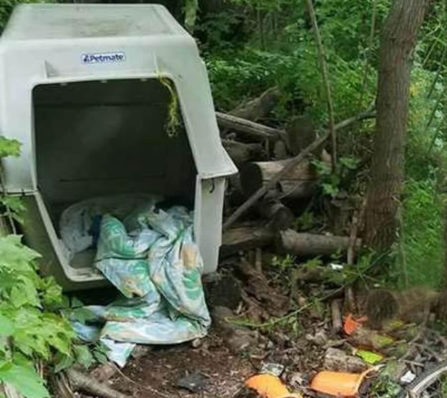dog-kennel-1-76471