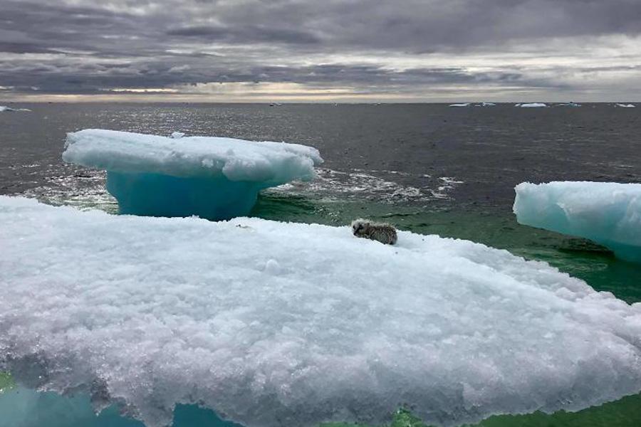 iceberg animal rescue