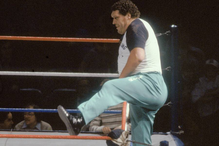 andre the giant stepping over ropes into WWE ring