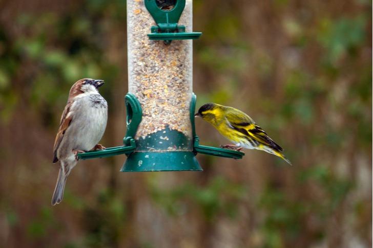 It Feeds The Birds